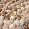 Original_Shell_Mosaics,Mosaic--Conch_Shell